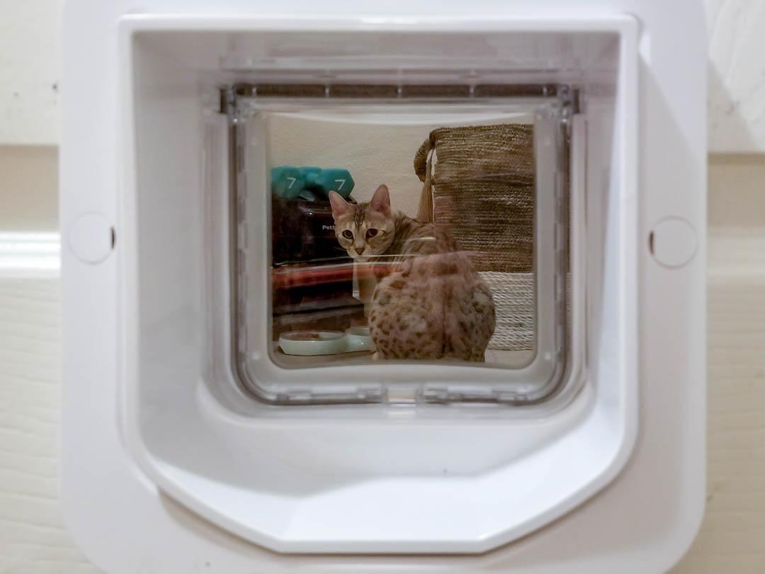 Cat Integration Thwarting A Cat Burglar Purrfectly Homey
